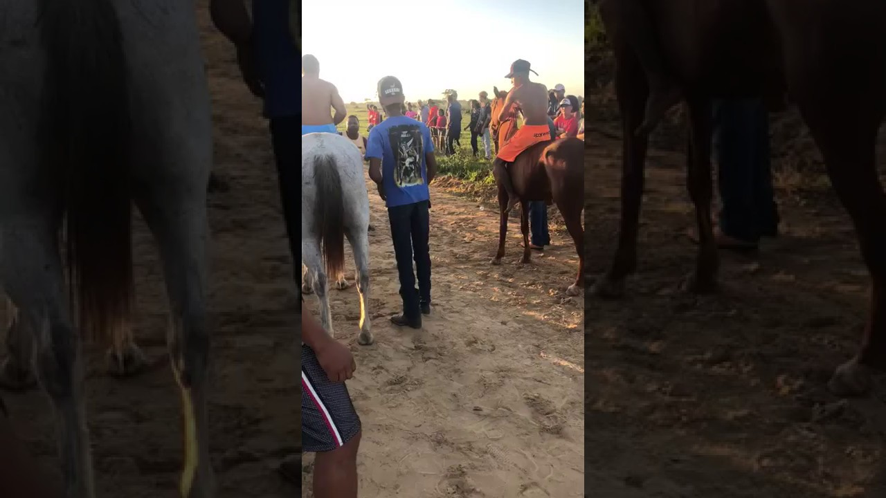 Don't Stand Behind Horses - #policepaparazzi