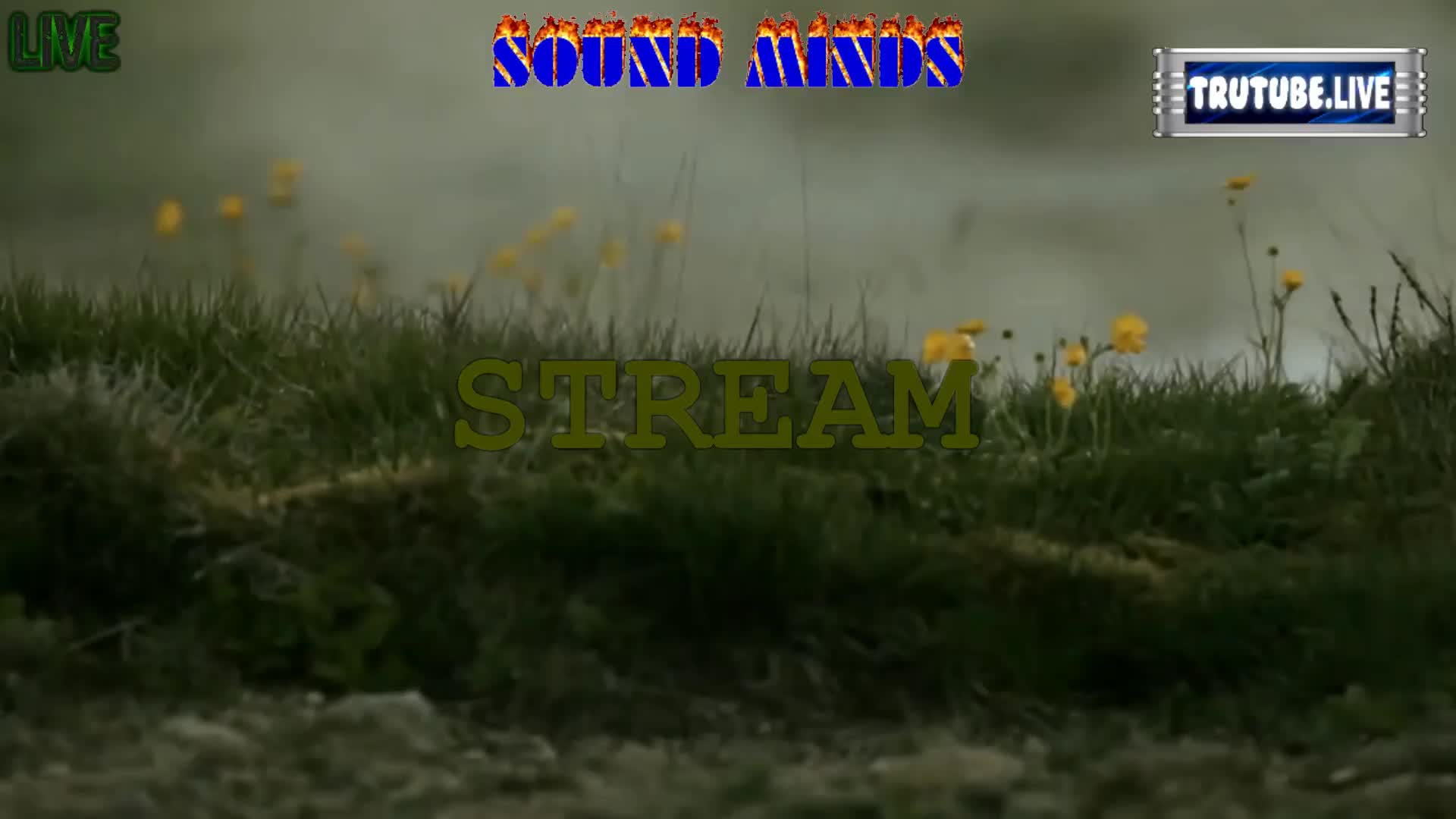 SOUND-MINDS--  sci-fi ?? BETTER THAN US -  are you ready !!  on 11-Sep-21-01:58:59